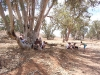 Bookabee Tours Australia - Lunch in a tree lined creek